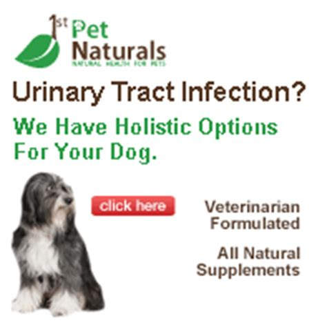 puppy urinary tract infection urinary tract infection tips page 252