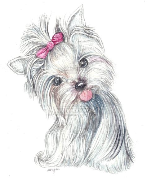 how to a yorkie puppy how to draw yorkies