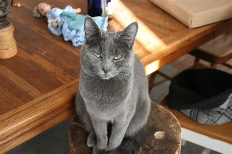 Cat With Stools by 2166222220 Be0107d653 Z Jpg
