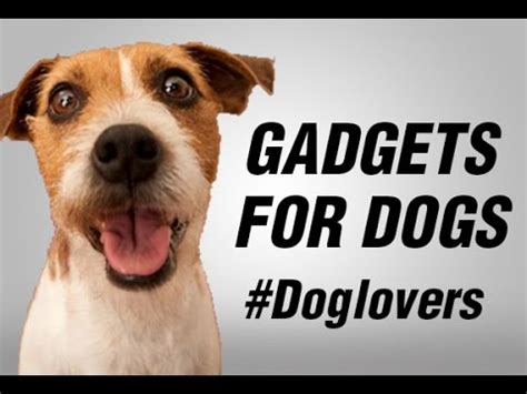 gadgets for pets hello my friend gadgets for dogs youtube