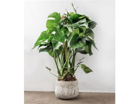 good house plants good house plants 6 house plants that clean your air a