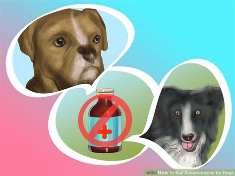 acepromazine dogs 3 ways to buy acepromazine for dogs wikihow