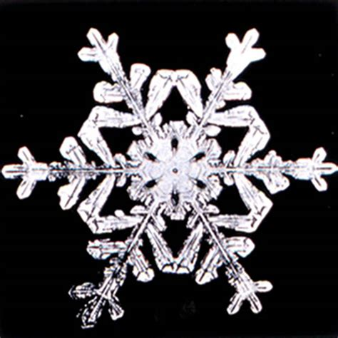 snowflake patterns real winter real snowflake patterns student for fun