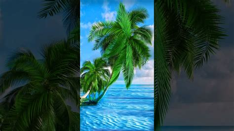 Live Palm Tree Wallpaper by Samsung Themes Animated Wallpaper Palm Trees Live