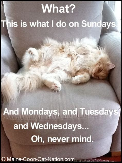 A Cat On A Sunday by 1000 Images About Weekday Quotes On Happy