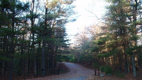 ashland willow pine imsge ashland ma ashland state park pines photo picture image massachusetts at city data