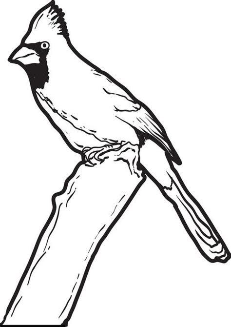 coloring page cardinal free printable cardinal coloring page for kids