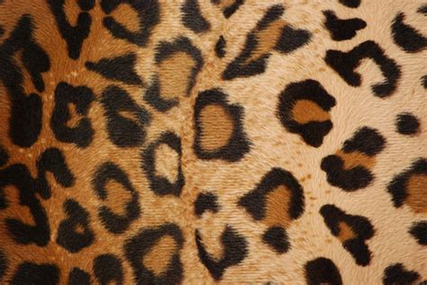leopard print fabric leopard print faux fur fabric excellent quality one yard