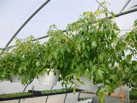 fine design terre hill pa whispering willow greenhouse terre hill lancaster county