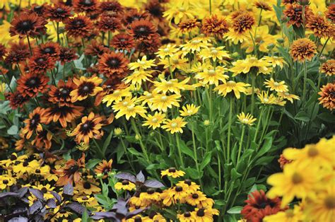 fall flower gardens fall garden planting guide design ideas and plants for