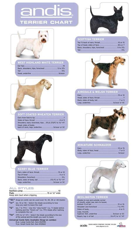 grooming guide 5 perfectly groomed celebrities 15 besten grooming terriers westie cairn norwich