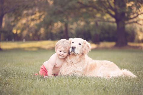 golden retriever with children fetching daily tagdaily tag