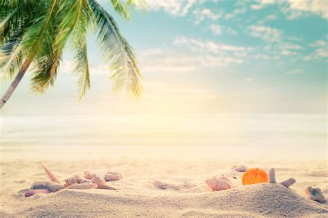 Home Design Concept With Beach Background Photo | seaside summer beach with starfish shells coral on