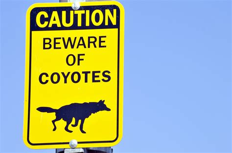 beware of beware of coyotes sign free stock photo domain pictures