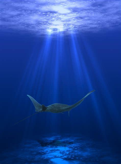 free images water horizon light underwater