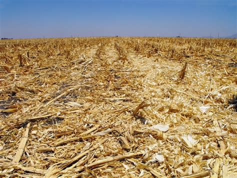 dead of field of dead crops images