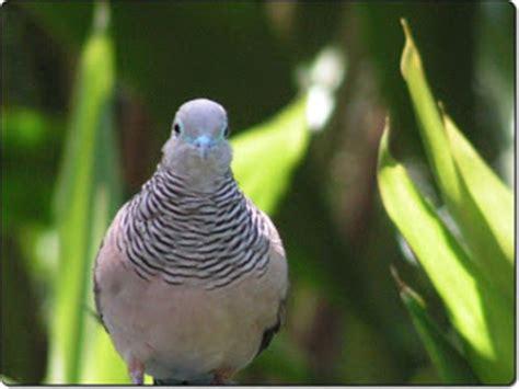 Tempat Makan Burung Perkutut berbagai berita dan artikel perkutut sjbirdfarm13