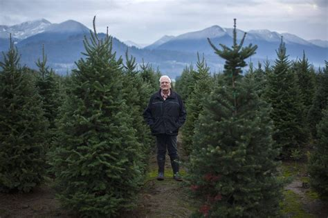 u s christmas tree shortage a gift for canadian growers