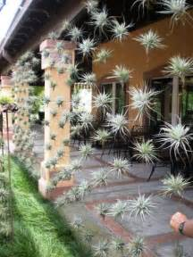 Air Plant Vertical Garden Creative Diy Gardening Idea 22 Vertical Garden