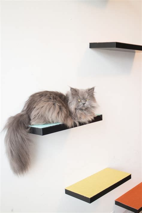 how to build cat shelves how to build cat shelves that your cat will