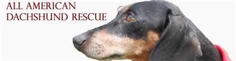 rescue columbus ohio dachshund rescue columbus ohio photo