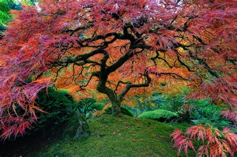 colorful tree landscape trees colors nature colorful cherry blossom tree