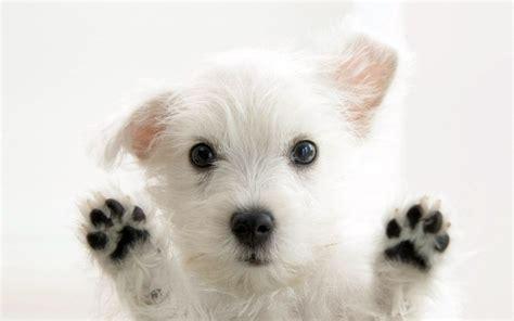 puppy s hello puppies wallpaper 9415183 fanpop