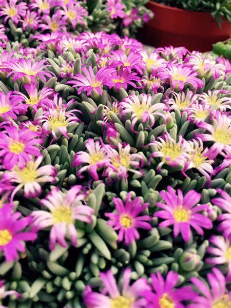 piante da giardino vendita on line vendita piante grasse on line hairstylegalleries