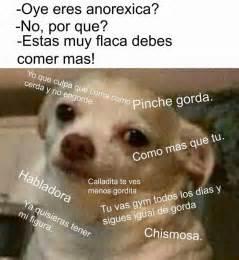 Memes De Chihuahua - 17 mejores im 225 genes sobre memes en pinterest dado meme