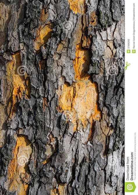 bark texture detail stock photo image  cover color