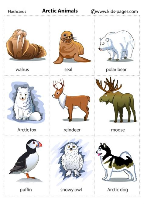 animals flashcards it s fun to learn animals flashcards it s fun to learn