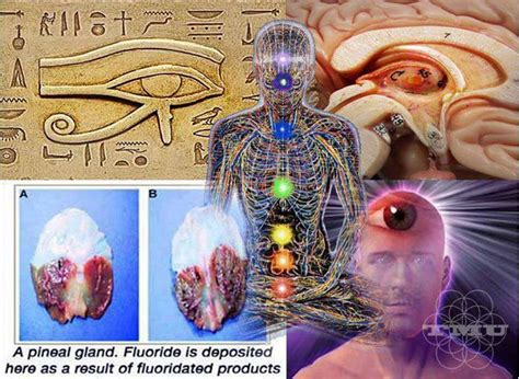 Vcd Original The Third Eye source www wakingtimes original post date december 15 2012 the primary goal of