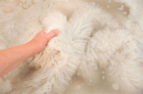 sheepskin rug washing how to clean and wash a sheepskin rug cleaning tips sheepskin rug and household tips
