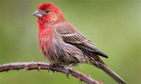 new study doubles the estimate of bird species in the world
