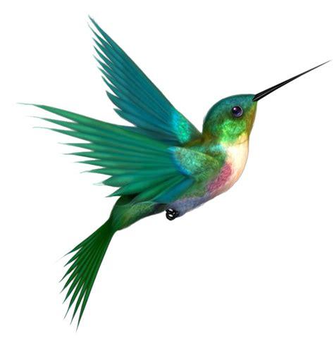 tattoo bird png hummingbird png transparent images png all