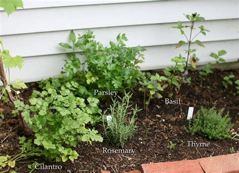 best herbs to grow indoors best herbs to grow indoors at home homeaholic net