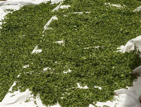 moringa garten angebot moringa pulver aus dem garten 171 bumi bahagia