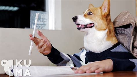 epic film dog epic pen spinning dog such awesome much wow doovi