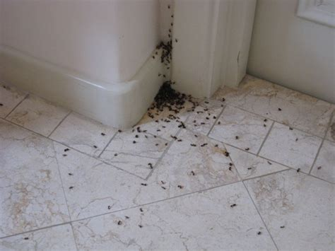 horizon pest will help you with all of your pest