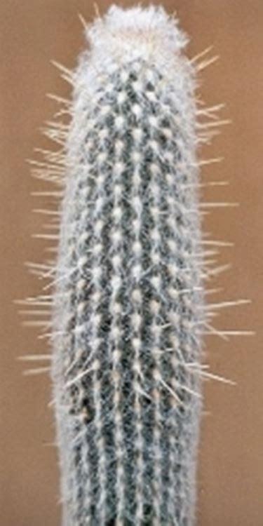 fiori senza luce cactus senza luce domande e risposte giardino