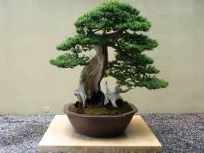bonzi tree bonsai trees in depth introduction