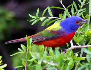 most colorful birds 20 most colorful bird in the world