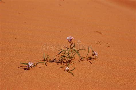 fiore nel deserto fiori nel deserto immagine stock immagine di luminoso