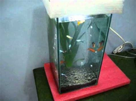 membuat filter aquarium dari kaca aquarium sederhana saya wmv youtube