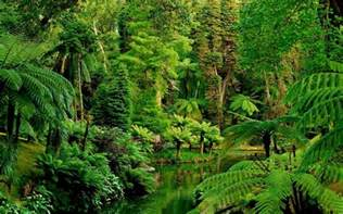 Jungle Landscape Pictures Landscape Nature Tree Forest Woods Jungle Garden Wallpaper