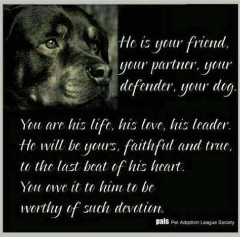 rottweiler jokes the rottweiler so truely devotional rotties for dogs rottweilers