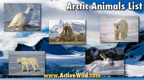 seasons and celestials an coloring book books arctic animals list with pictures facts information