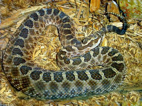the snake in my 45 degree basement boardgamegeek
