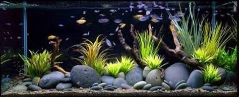 natural fish tank decoration ideas youtube good fish tank decoration ideas fish tank accessories in