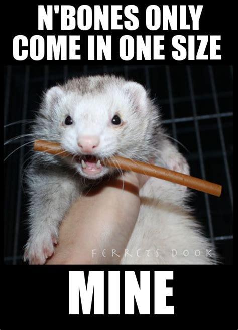 Ferret Meme - ferret fuzzy cute adorable animals playing biting